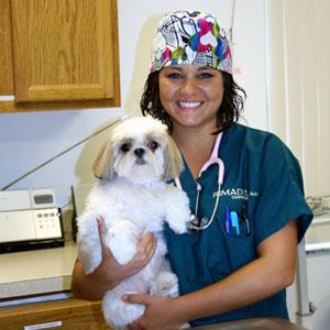 Previous Veterinary Staff - Lin