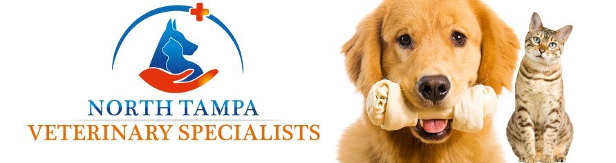 Mobile Orthopedic Veterinarian - North Tampa Veterinary Specialists