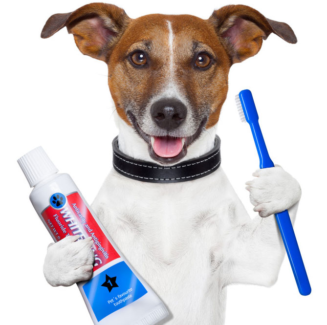 Dental Care for Your Pet