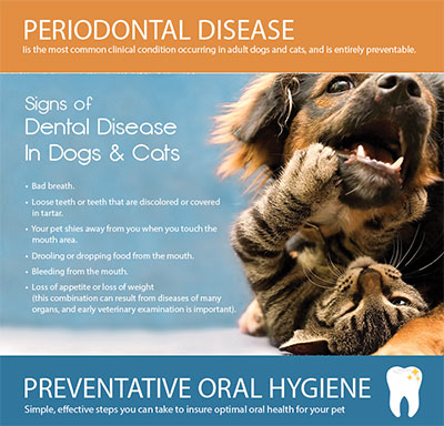 Periodontal Disease in Dogs & Cats InfoGraphic