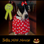2nd Place Winner Bella Mini Mouse - Pet Costume Contest Entry