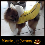 Kenny Top Banana - Pet Costume Contest Entry