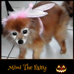 Mimi the Fairy - Pet Costume Contest Entry