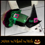 Minx Wicked Witch - Pet Costume Contest Entry