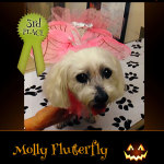 3rd Place Winner Molly Flutterfly - Pet Costume Contest Entry