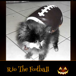Rio The Football - Pet Costume Contest Entry