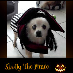 Skully The Pirate - Pet Costume Contest Entry