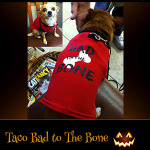 Taco Bad to the Bone - Pet Costume Contest Entry
