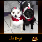 The Boys - Pet Costume Contest Entry