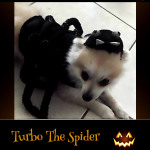 Turbo The Spider - Pet Costume Contest Entry