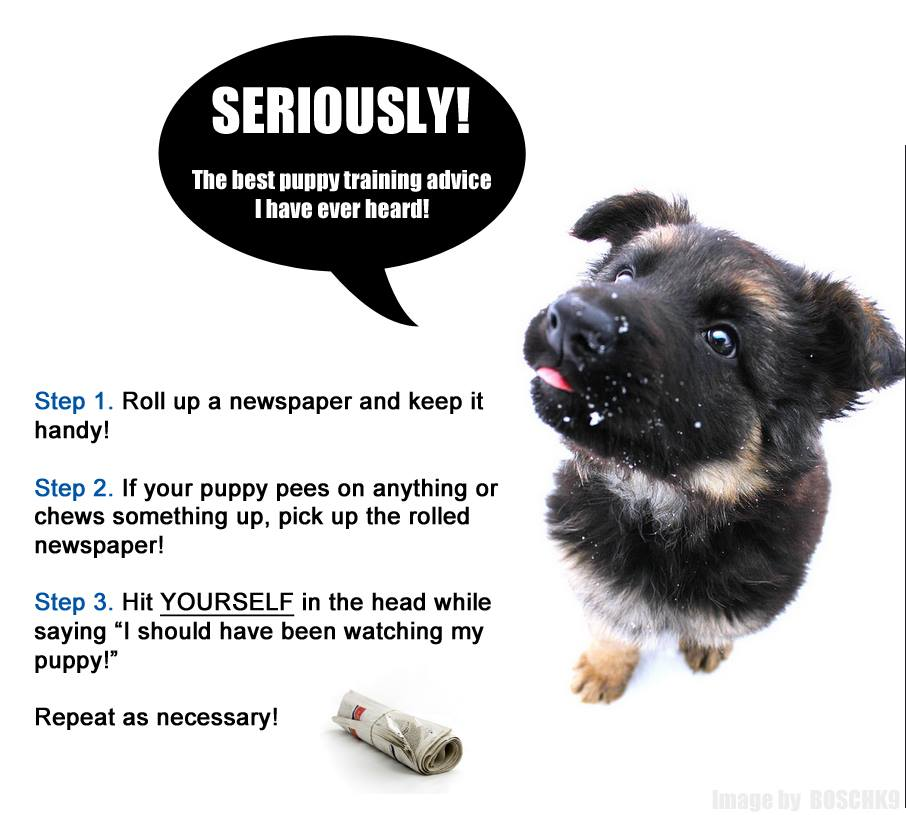 Seriously! The Best Puppy Training Advice I Ever Heard!