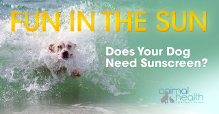 Do Dogs Need Sunscreen?