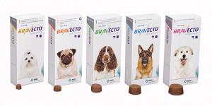 Facts About Fleas - Bravecto Flea Prevention