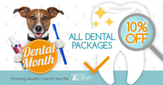 Save on Dental Packages for Your Dog and Cat!