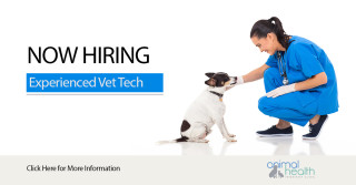 Experienced Part-Time Veterinary Technician Position Available