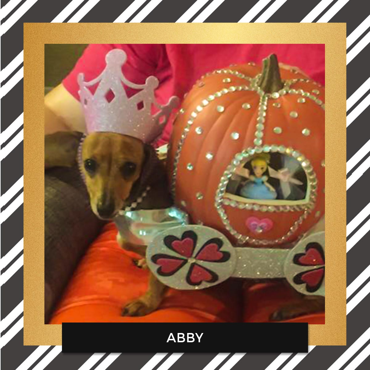 Abby - Halloween Pet Costume Contest Entry