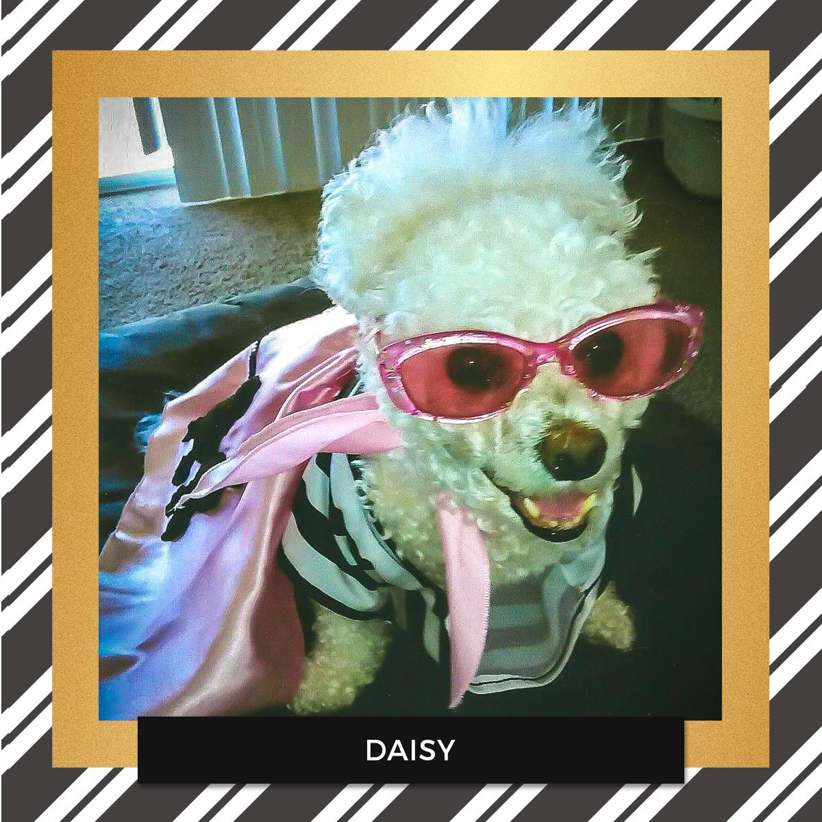 Daisy - Halloween Pet Costume Contest Entry