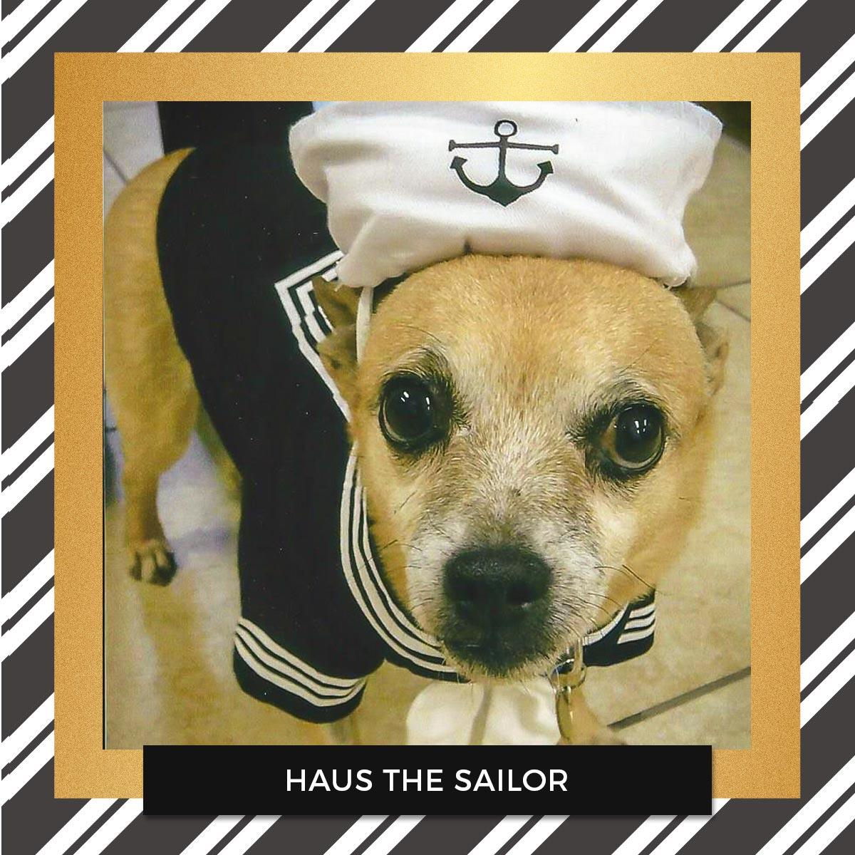 Haus - Halloween Pet Costume Contest Entry