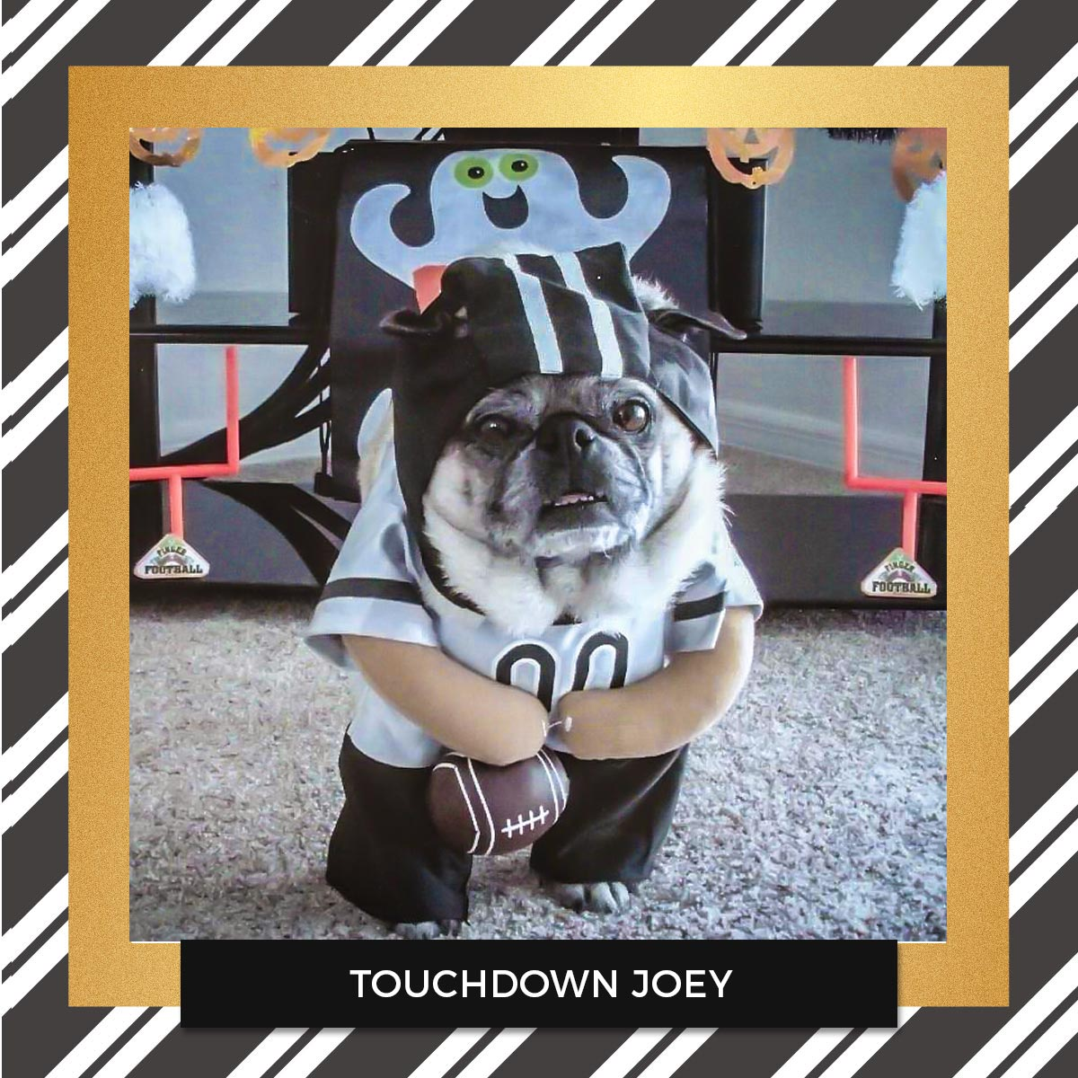 Touchdown Joey - Halloween Pet Costume Contest Entry