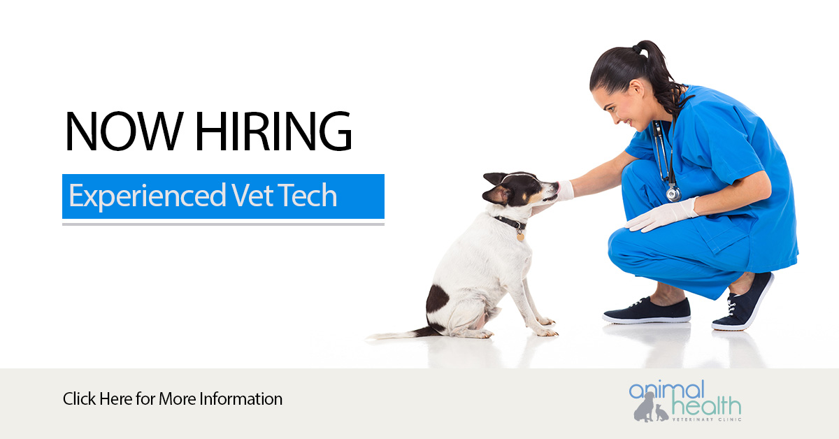 Full Time Experienced Veterinary Technician Assistant